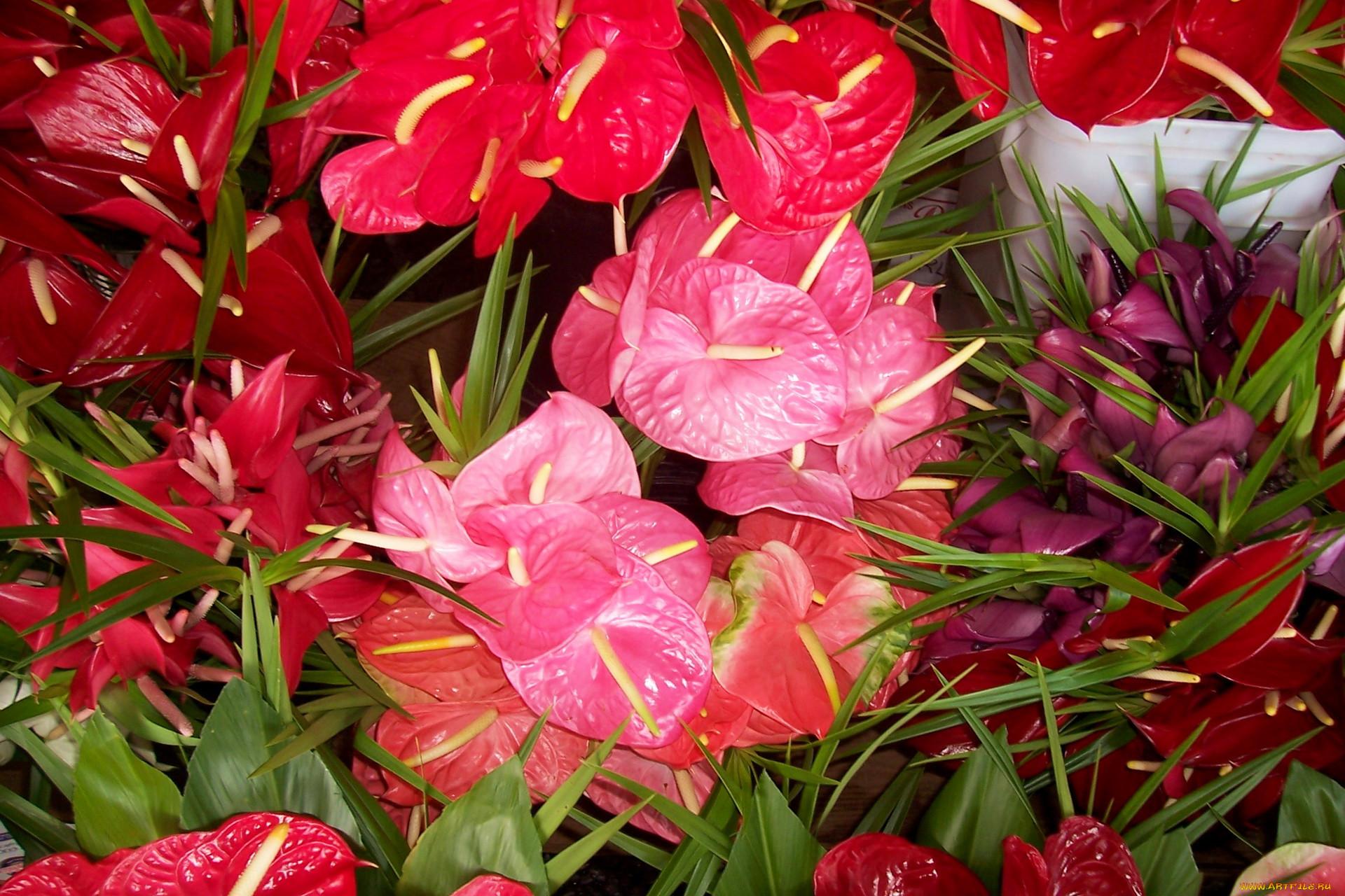Фото цветы счастье